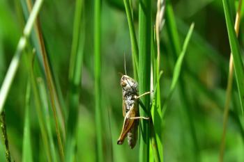 Araignées, insectes et fleurs de la forêt de Moulière (Les Closures - La Fontaine Salée)