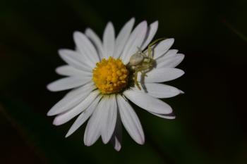 Araignées, insectes et fleurs de la forêt de Moulière (Les Closures - La Grosse Boussée - La Fontaine Salée)