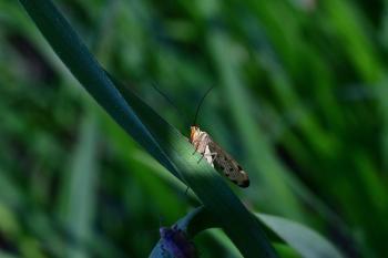 Araignées, insectes et fleurs de la forêt de Moulière (Les Closures)
