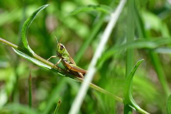 Araignées, insectes et fleurs de la forêt de Moulière (Les Deux Bornes - Le Grand Soubis)