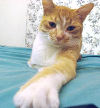 Arthas cat