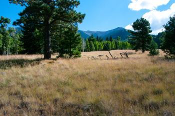 Aspen Loop Trail No. 73