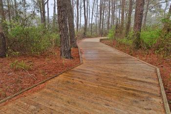 Assateague Island Boardwalk Trail - HDR