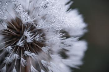 Auto Focus Photography of White Flower