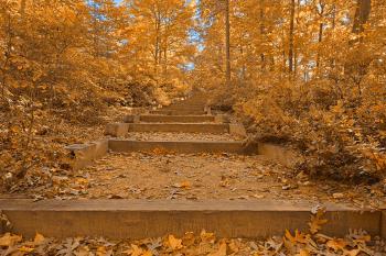 Autumn Arboretum Stairway - Golden Age Nostalgia HDR