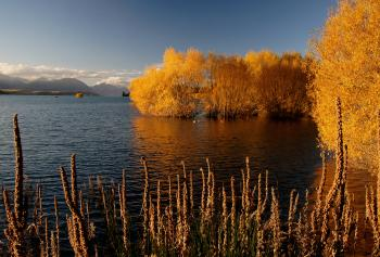 Autumn at Lake Tekapo NZ (14)
