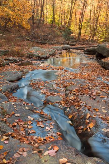 Autumn Boomerang Stream