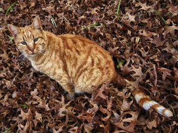 Autumn cat 1
