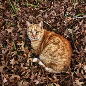 Autumn cat 2