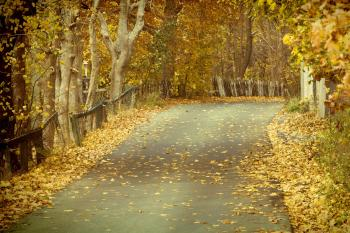 Autumn leaves on road