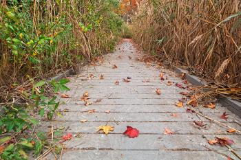Autumn Marsh Boardwalk - HDR