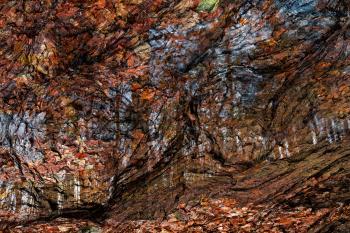 Avalon Wood Impressions