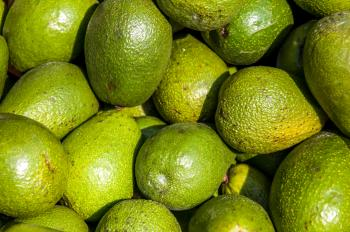 Avocado background on a market stail