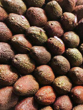 Avocado Lot