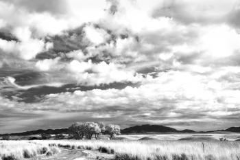 AZ - SAN RAFAEL VALLEY GRASSLANDS, SE of Patagonia, scc (12)