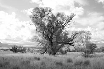 AZ - SAN RAFAEL VALLEY GRASSLANDS, SE of Patagonia, scc (16)