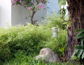 Bamboo Rock Garden