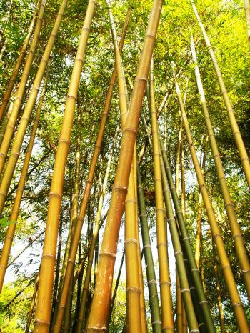 Bamboo Tree during Daytime