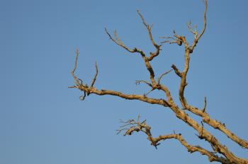 Bare Brown Branch Tree