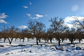 Bare Trees over Snow Ground Under Blue Cloudy Sky