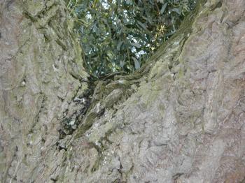 Bark texture