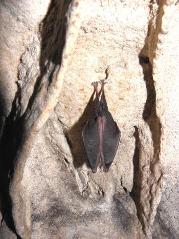 Bat sleep on the wall