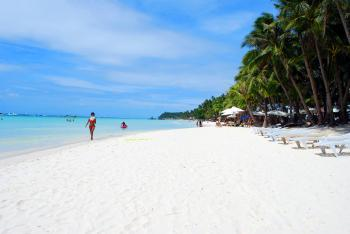 Beach Lounger on Shore With Coconut Trees