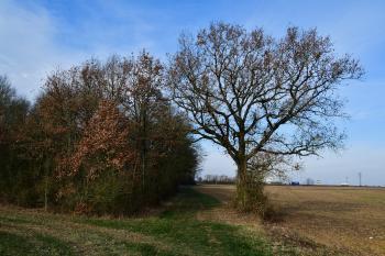 Beaulieu - Le Pied d'Agneau (voir l'itinéraire sur : http://ansozour.free.fr/Beaulieu.html)