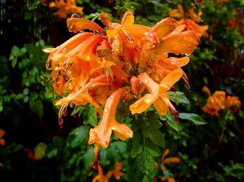 Beautiful blooming orange flower