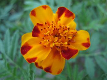 Beautiful flower macro