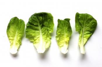 Beautiful homegrown lettuce