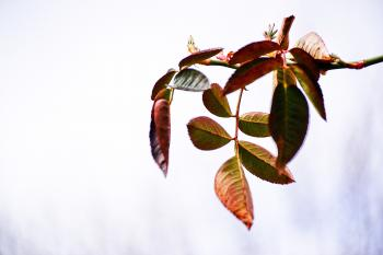 Beautiful unusual plant with leaves in ombre color