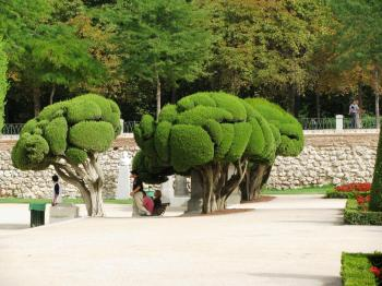 Beautifully shaped cypress trees