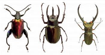 Beetle Closeup