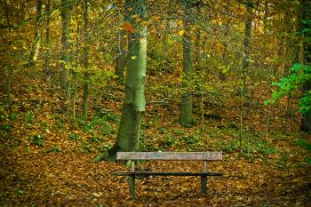 Bench in Park during Autumn