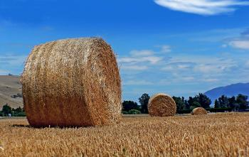 Big round hay bales.