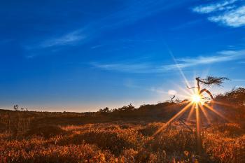 Big Sunrise Meadows