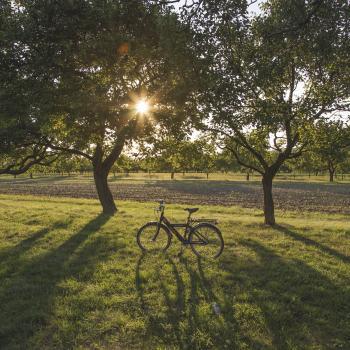 Bike in the Field