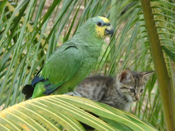Bird and Cat on Palm Tree