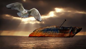 Bird and old ship wreck