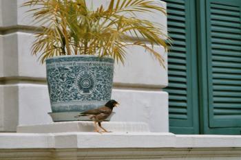 Bird in bangkok