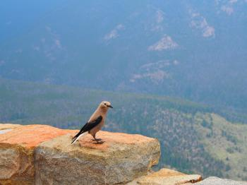 Bird on ledge