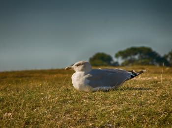 Bird Sitting on Grassy Ground
