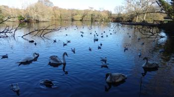 Birds and Swans