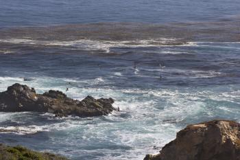 Birds flying (Big Sur)