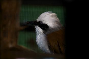 Birds head