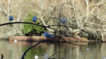 Birds in Southampton Common Pond