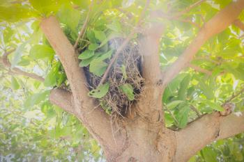 Birds nest on the tree