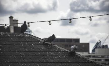 Birds on Rooftop in London