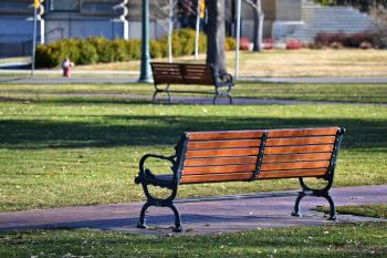 A wooden bench in the park in summer